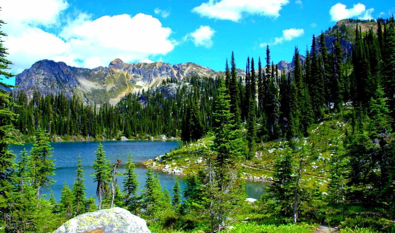 природа, landscape, usa, парки, леса, горы, деревя, water, ёль, трава, ствол,