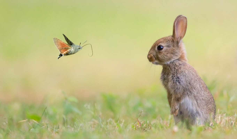 кролик, small, животные, бабочка, martha, mac, little, snitch,