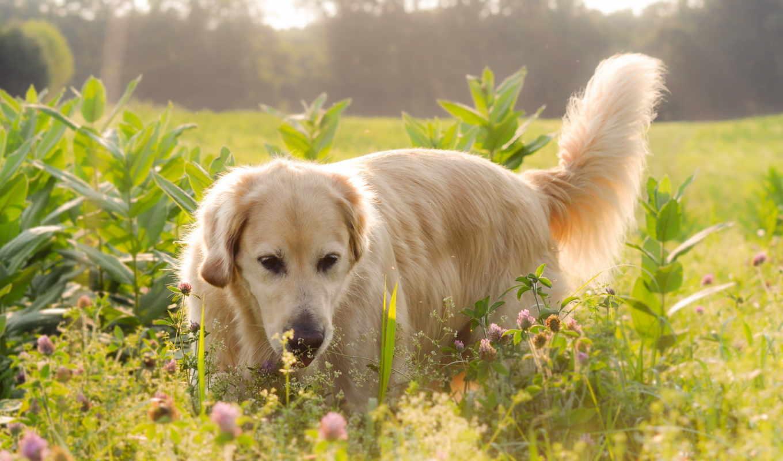 собака, animals, dogs, summer, ngày, köpekler,
