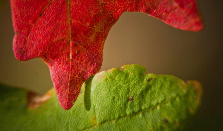 осень, الگو,