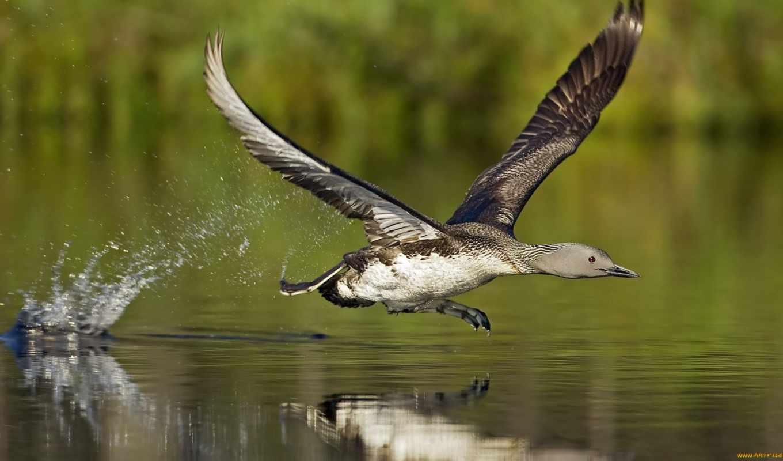 birds, flying, птицы, ,