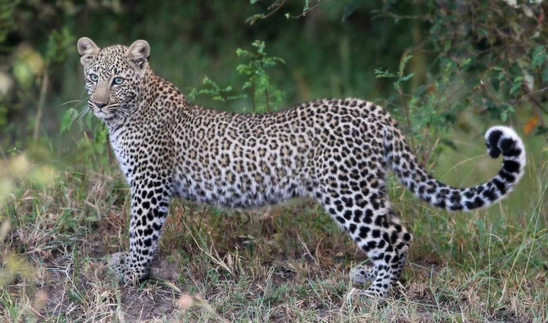 африка, животные, olivier, группа, this, wildife, kenya,