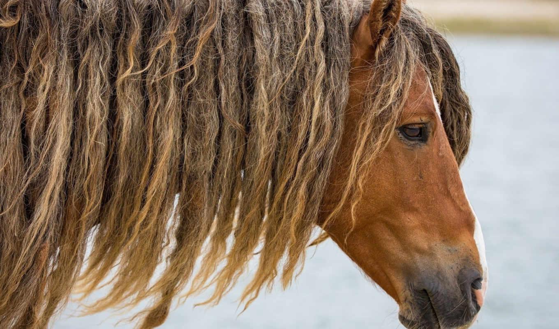 морда, лошадь, profile, zhivotnye,