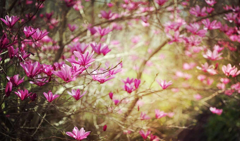 весна, цветы, природа, ветки, full,