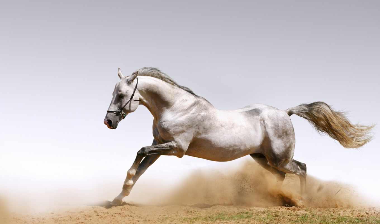 лошади, лошадь, les, cheval, horses, фотообои, ecran, fone,