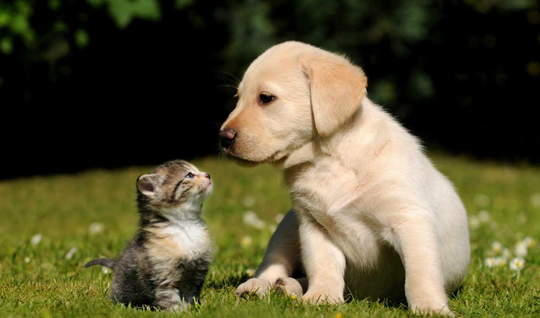 кошки, animals, животные, cats, котята, высоком,