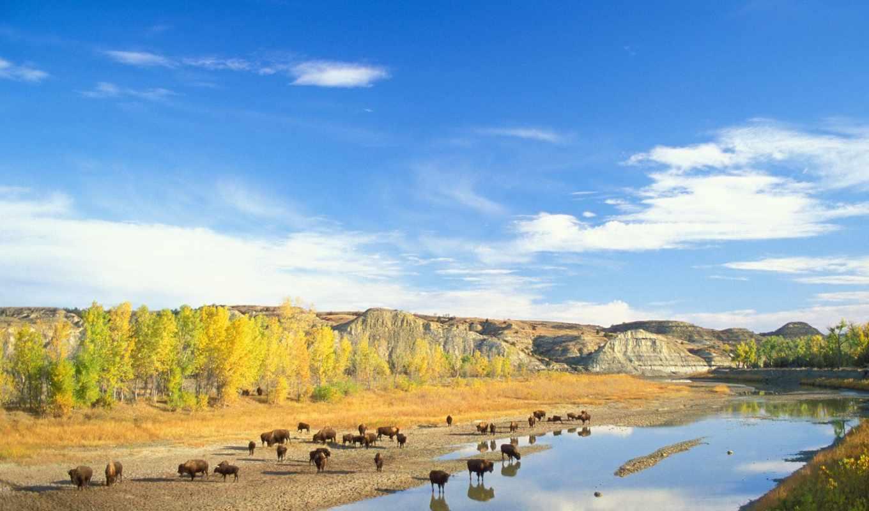 zhivotnye, животных, река, missouri, north, dakota, little, theodore, бизон,