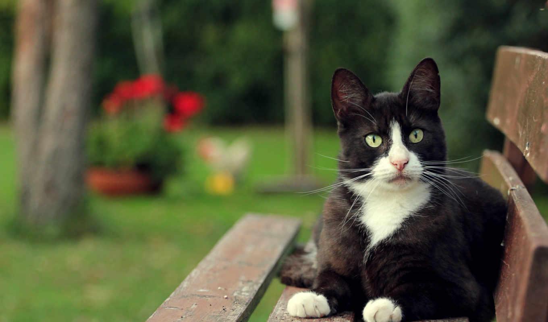 cats, tigers, кот, white, оранжевый, friends, биг, hunters, трава,