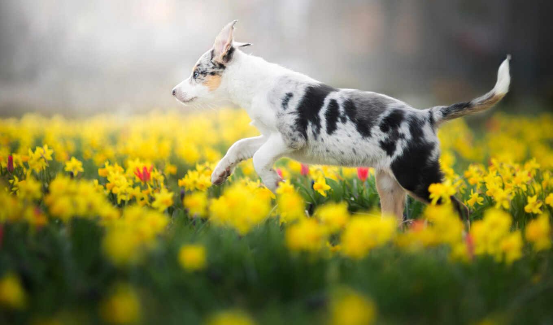 собака, весна, род, title, цветы, утро