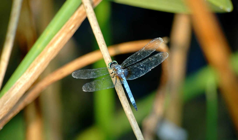 трава, крылья,