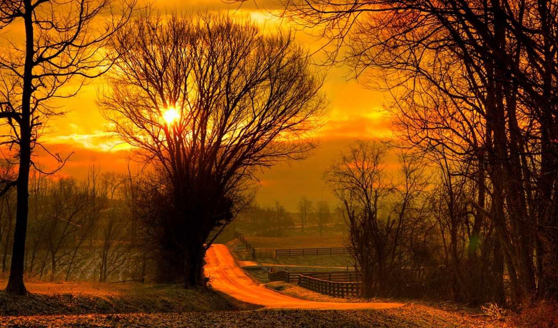 лес, природа, восход, trees, небо, поле, sun, закат, листья,