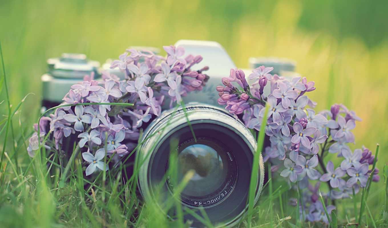 siren, cvety, фотокамера, фотоаппарат, трава,