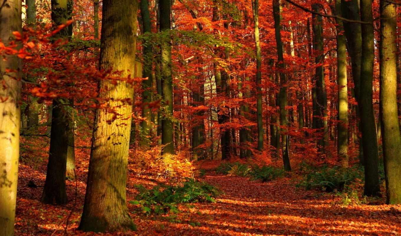 осень, лес, деревя, природа,