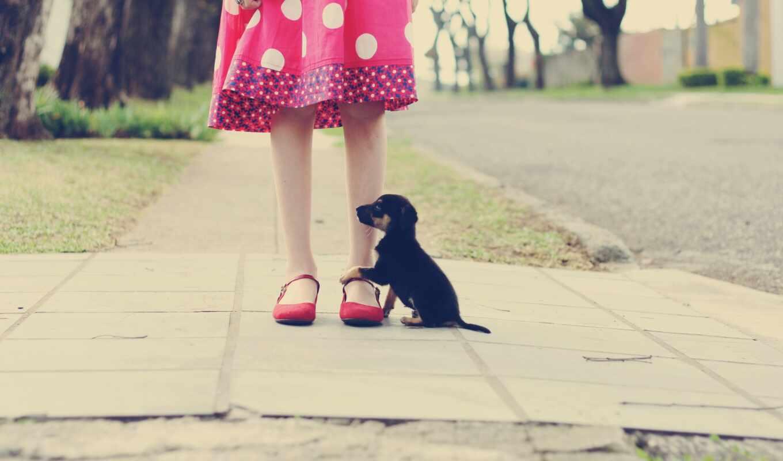 собака, девушка, щенок, black, little, leg, foot, animal, розовый