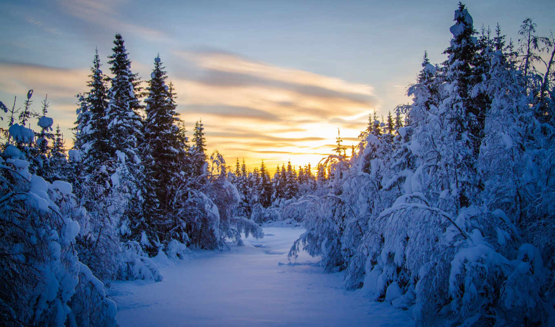 природа, winter, снег, утро, лучи, лес,