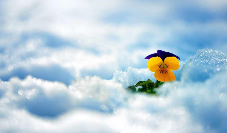 снег, цветы, winter,