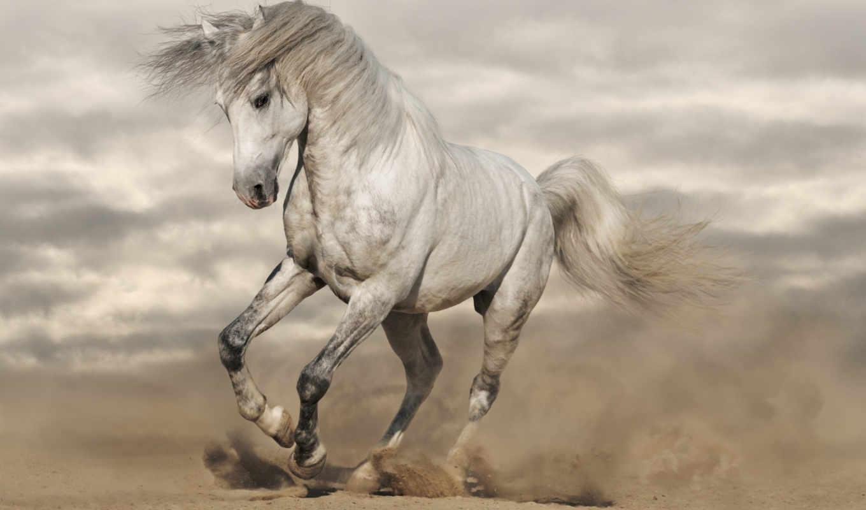 ani, календарь, лошадь, лошади, psd, модульная, córdoba, настенный, интернет, календари,