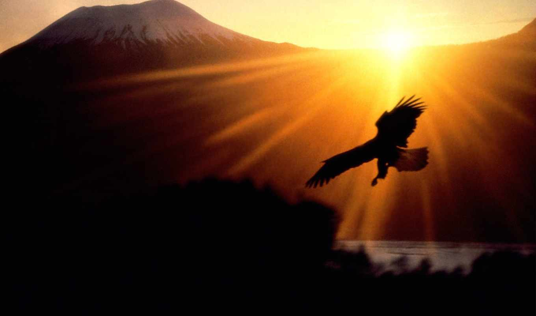 птицы, горы, лучах, оуэн, небе, солнца, моа, горе, заката, темы, полет,