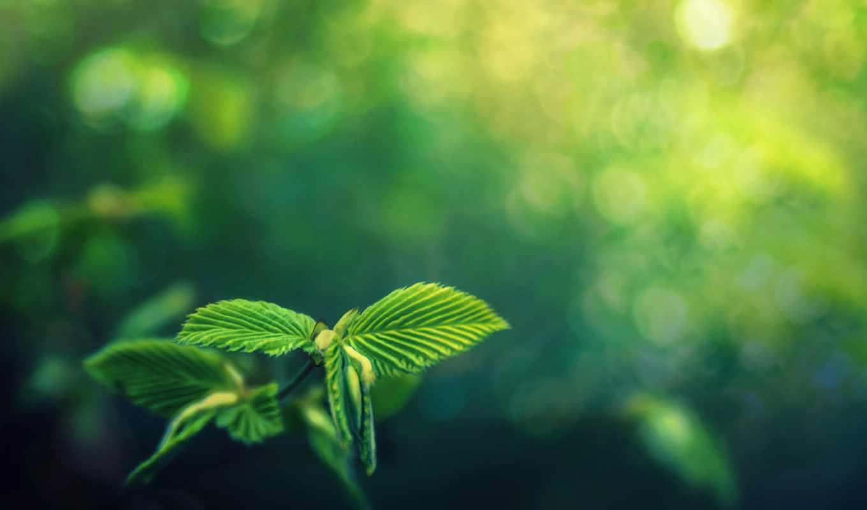 зелёный, картинка, боке, дневник, лист, листва, лес, природа,