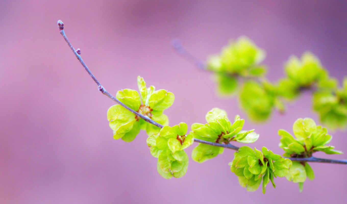 flowers, green, small, background, flower, pictures,