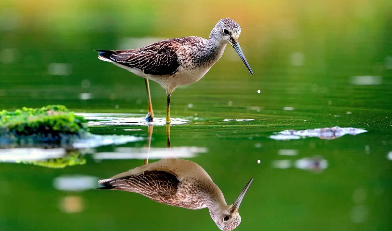 отражение, voda, животных, река, птица,
