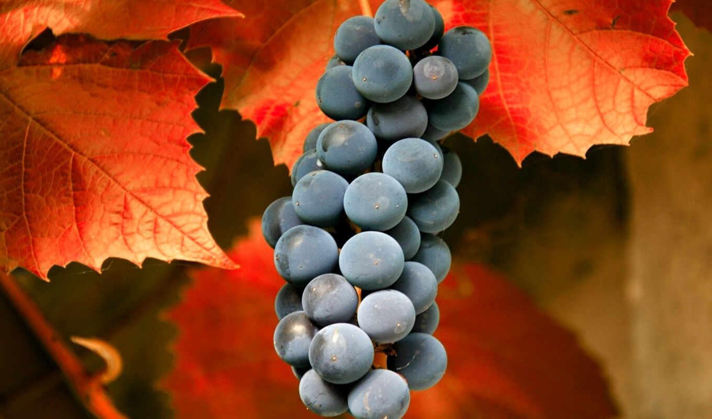 виноград, фон, meal