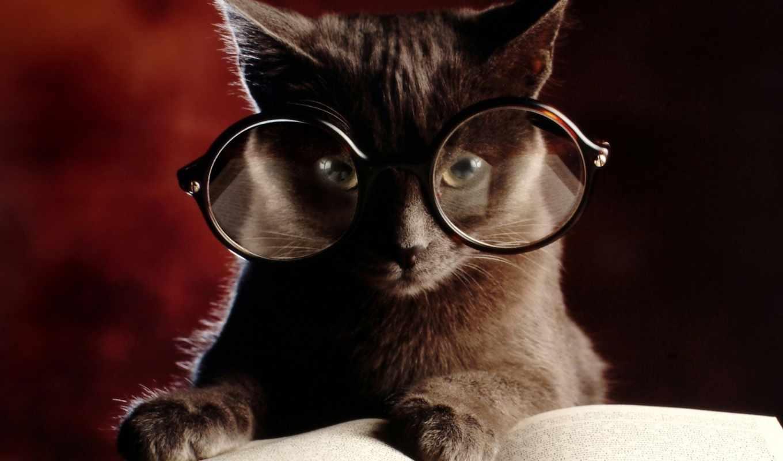 очках, кот, лежит, книге, кошки, загружено, уже, серый, наушниках,