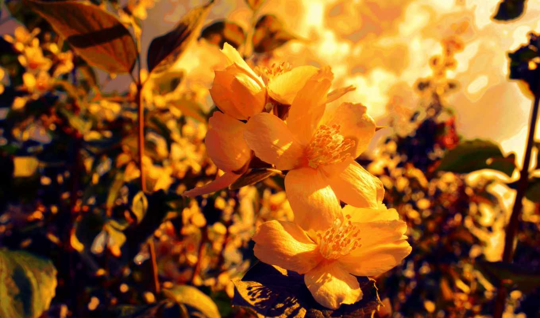 yellow, flowers, фон, resolution,