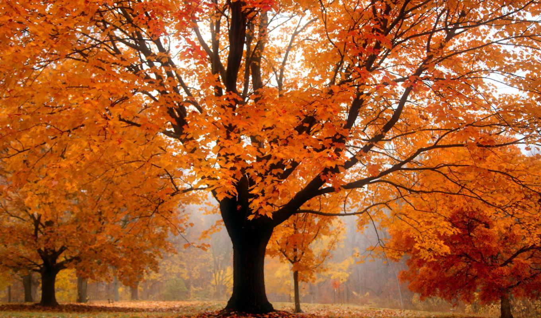 осень, дерево, landscape,