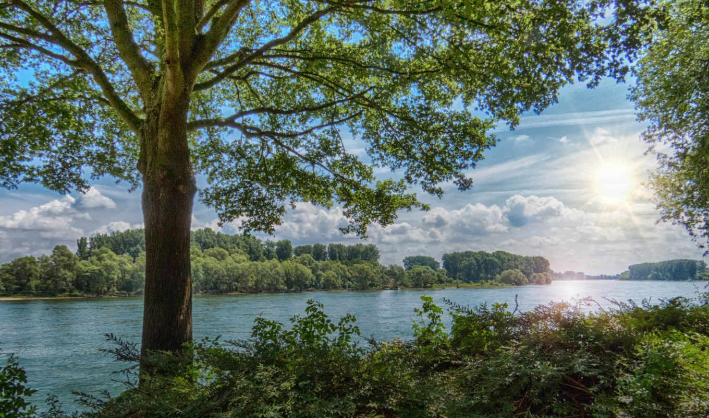 sun, дерево, summer, страница, красивые, лес,