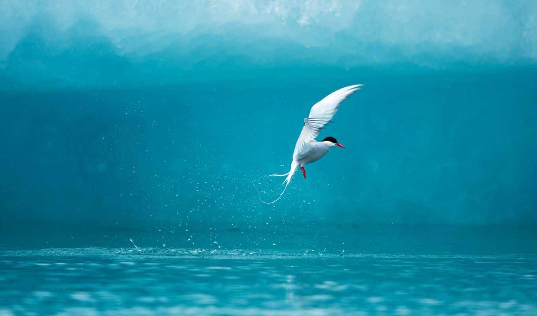 со, чайка, шпалери, морем, море, капли, great, fireworks, arctic,