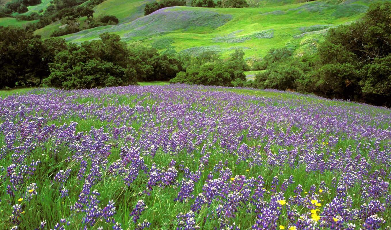,поляна, цветы, лето, поле, лес,