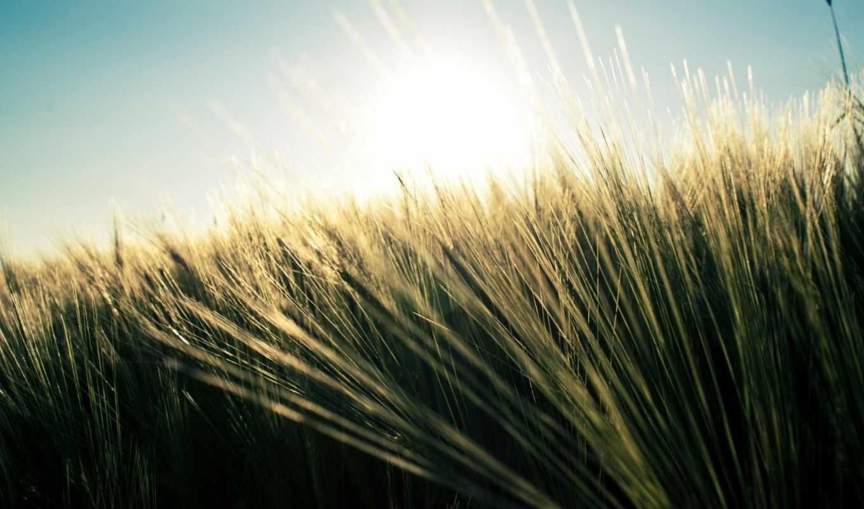природа, поле, трава, небо, бесплатные, где, представлены,