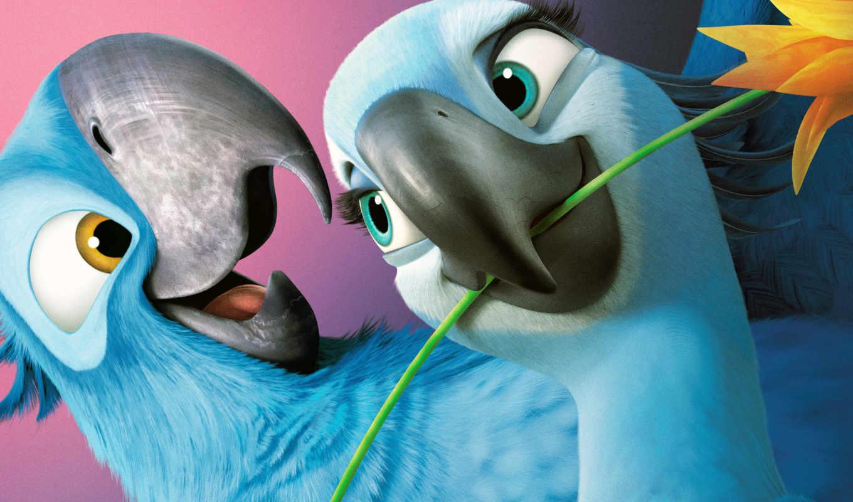 попугаи, rio, синие, попугай, качестве, бесплатные,