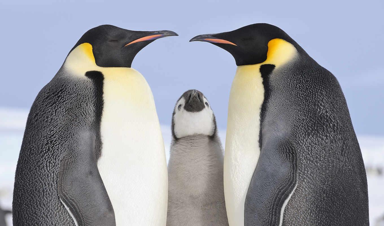 animals, desktop, birds, fondos, pinguine, cool, free, high,
