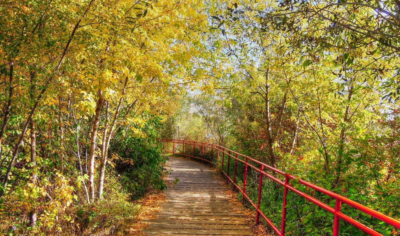 природа, осень, дорога, деревья,