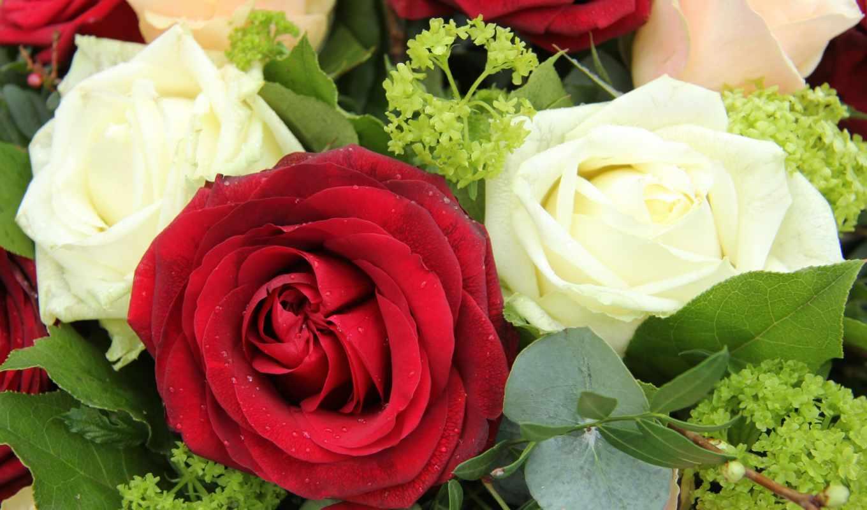 розы, цветы, букеты, красные, букет, red, белые,