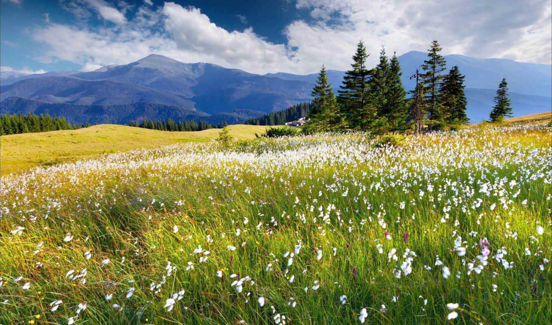 cvety, горы, priroda, oblaka, небо, луга,