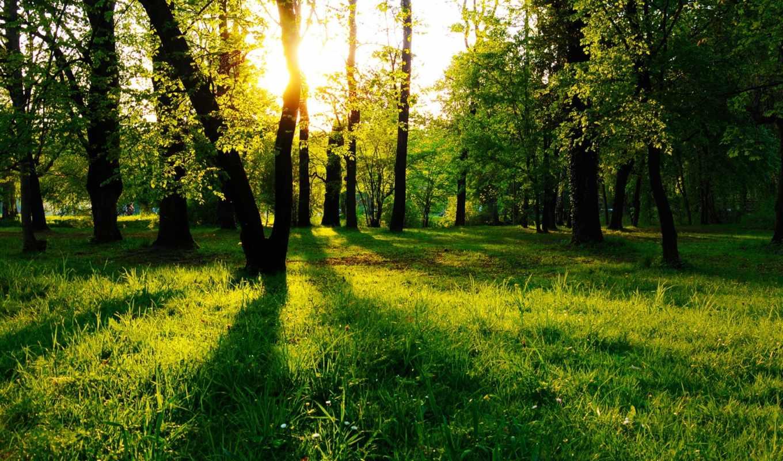 разных, разрешениях, лес, солнечные, лучи,