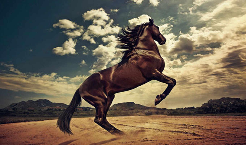 лошадь, лошадей, rising, был, zhivotnye, коричневая, гарцует,