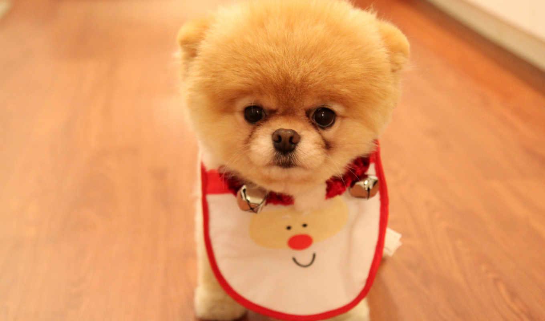 собака, самые, собаки, собак, породы, красивые,