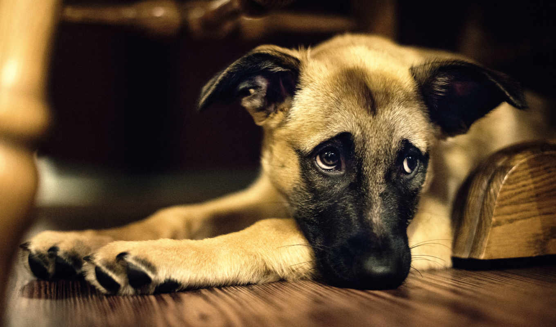 pes, obrázky, psa, you, собак, pozadia, собака, ever, je, smutný,