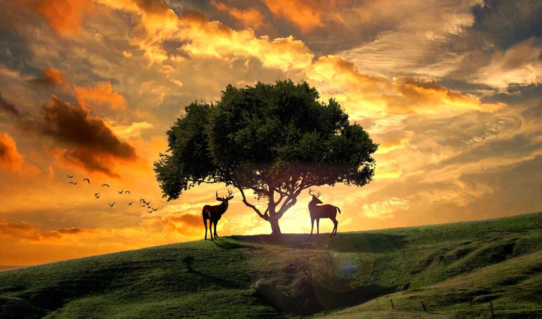 лань, закат, дерево, steam, hill, art, небо, оригинал, поле, тематика