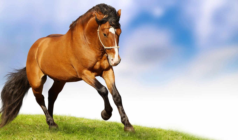 фотообои, лошадь, cvety,