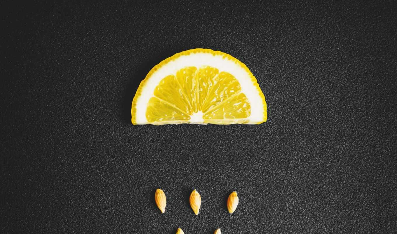 meyer, lemon, common, цитрус, hybrid, regular