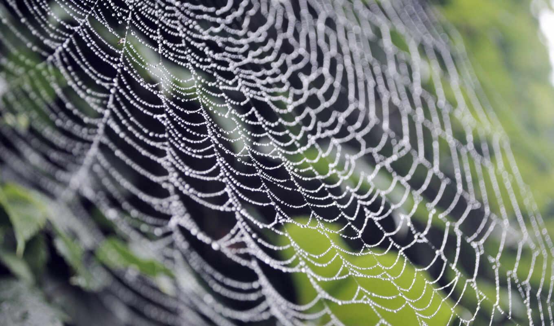 паутина, роса, макро, природа,