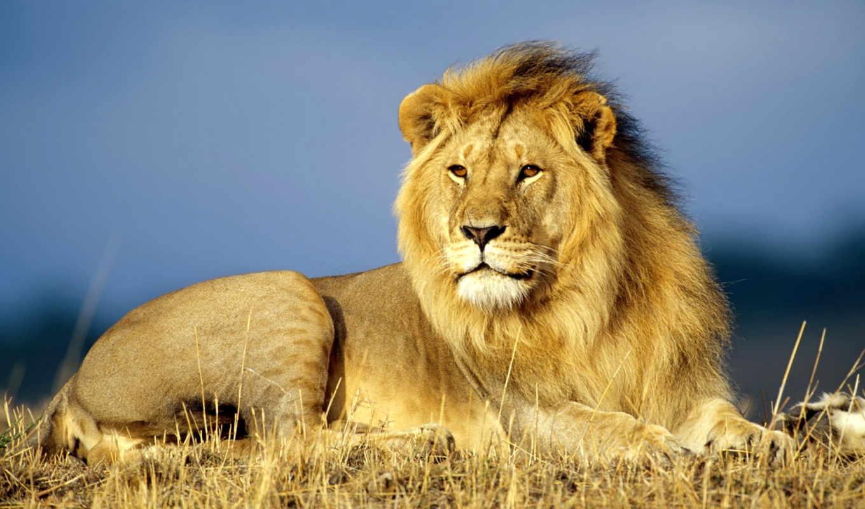 других, львы, львів, найти, contact, зарегистрируйтесь, ваших, войдите, lion, детей, льва,