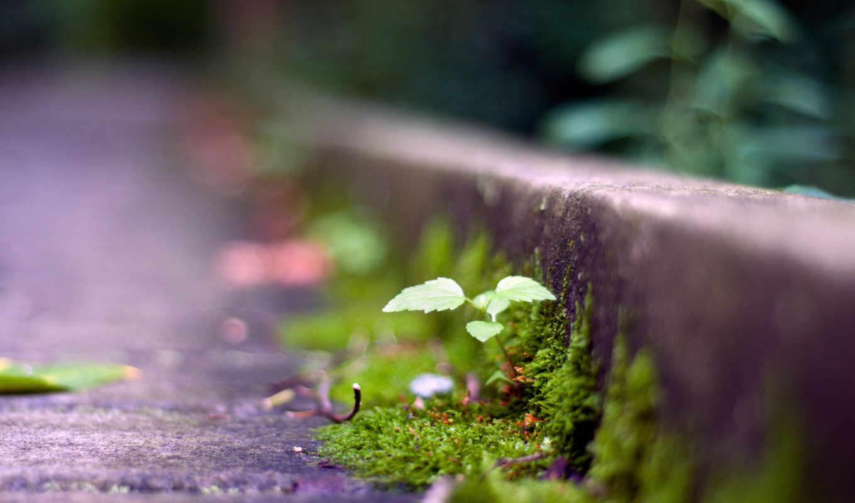 асфальт, есть, вас, если, dream, desire, сквозь, even, прорастете, настойчивость,
