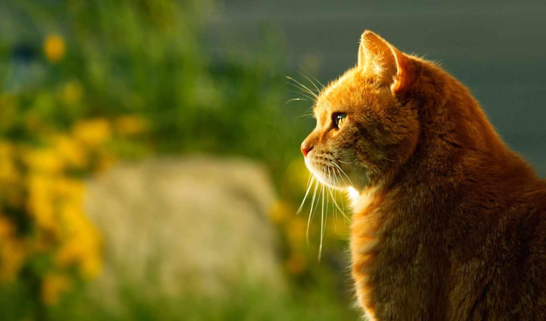 кот, profile, коты, июл,