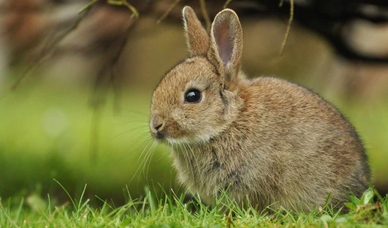 кролик, ultra, bunny, cute, трава, минеральные, baby, премиксы,